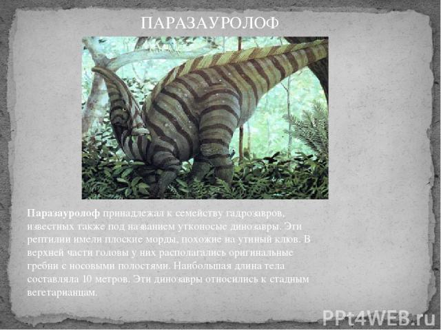 Паразауролофпринадлежал к семейству гадрозавров, известных также под названием утконосые динозавры. Эти рептилии имели плоские морды, похожие на утиный клюв. В верхней части головы у них располагались оригинальные гребни с носовыми полостями. Наибо…