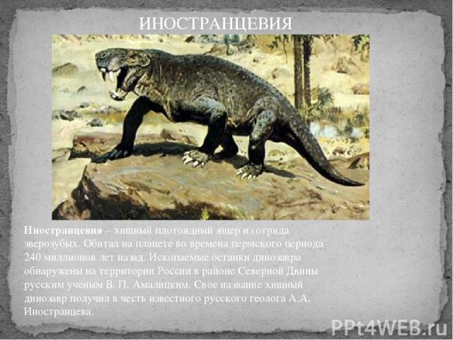 Иностранцевия– хищный плотоядный ящер из отряда зверозубых. Обитал на планете во времена пермского периода 240 миллионов лет назад. Ископаемые останки динозавра обнаружены на территории России в районе Северной Двины русским учёным В. П. Амалицким.…