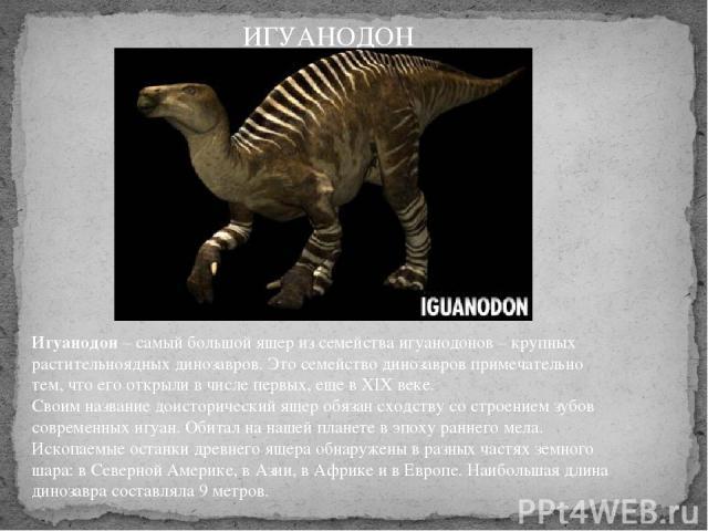 Игуанодон– самый большой ящер из семейства игуанодонов – крупных растительноядных динозавров. Это семейство динозавров примечательно тем, что его открыли в числе первых, еще в XІX веке. Своим название доисторический ящер обязан сходству со строени…