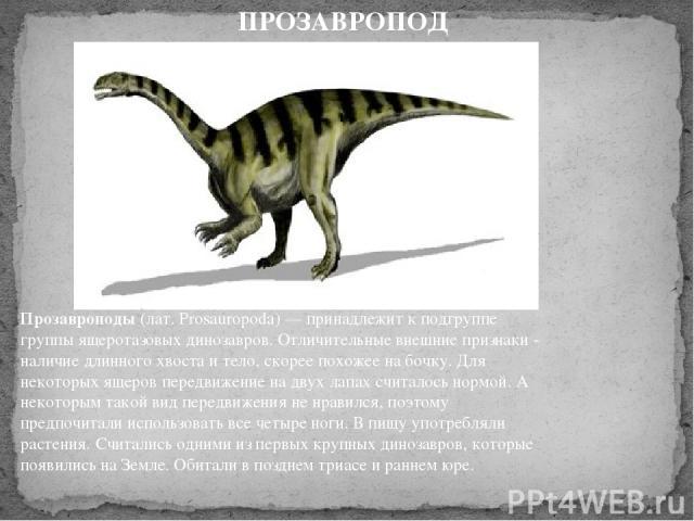 Прозавроподы(лат. Prosauropoda) — принадлежит к подгруппе группы ящеротазовых динозавров. Отличительные внешние признаки - наличие длинного хвоста и тело, скорее похожее на бочку. Для некоторых ящеров передвижение на двух лапах считалось нормой. А …
