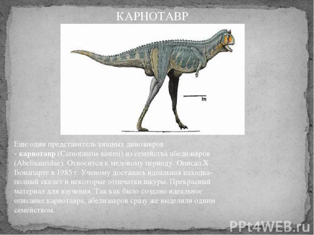 Еще один представитель хищных динозавров -карнотавр(Carnotaurus sastrei) из семейства абелизавров (Abelisauridae). Относится к меловому периоду. Описал Х. Бонапарте в 1985 г. Ученому досталась идеальная находка-полный скелет и некоторые отпечатки …