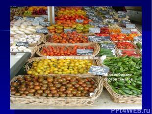 Многообразие сортов томатов Многообразие сортов томатов