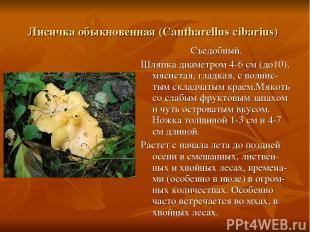 Лисичка обыкновенная (Cantharellus cibarius) Съедобный. Шляпка диаметром 4-6 см