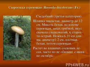 Сыроежка сереющая (Russula decolorans (Fr.) Съедобный (третья категория) Шляпка