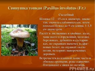 Свинушка тонкая (Paxillus involutus (Fr.) Съедобный Шляпка 12—15 см в диаметре,