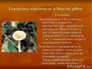 Говорушка ворончатая (Clitocybe gibba) Съедобная. Диаметр шляпки 4-8 см, сначала
