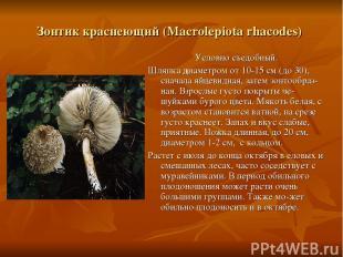 Зонтик краснеющий (Macrolepiota rhacodes) Условно съедобный. Шляпка диаметром от