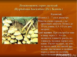 Ложноопенок серно-желтый (Hypholoma fasciculare (Fr.) Kumm.) Ядовитый. Шляпка 2—