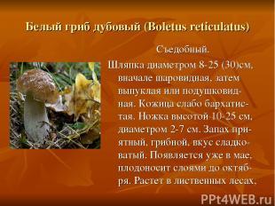 Белый гриб дубовый (Boletus reticulatus) Съедобный. Шляпка диаметром 8-25 (30)см