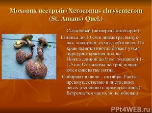 Моховик пестрый (Xerocomus chrysenterom (St. Amans) Quel.) Съедобный (четвертая