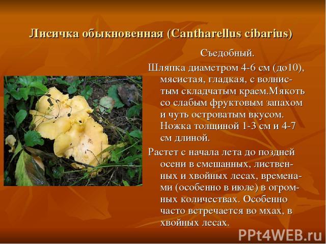 Лисичка обыкновенная (Cantharellus cibarius) Съедобный. Шляпка диаметром 4-6 см (до10), мясистая, гладкая, с волнис-тым складчатым краем.Мякоть со слабым фруктовым запахом и чуть островатым вкусом. Ножка толщиной 1-3 см и 4-7 см длиной. Растет с нач…