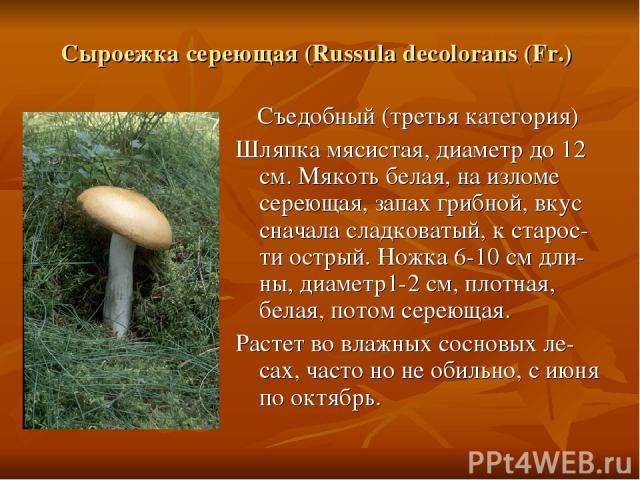 Сыроежка сереющая (Russula decolorans (Fr.) Съедобный (третья категория) Шляпка мясистая, диаметр до 12 см. Мякоть белая, на изломе сереющая, запах грибной, вкус сначала сладковатый, к старос-ти острый. Ножка 6-10 см дли-ны, диаметр1-2 см, плотная,…