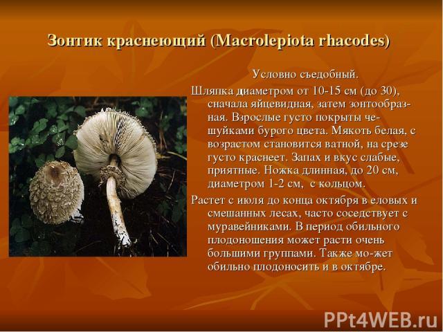 Зонтик краснеющий (Macrolepiota rhacodes) Условно съедобный. Шляпка диаметром от 10-15 см (до 30), сначала яйцевидная, затем зонтообраз-ная. Взрослые густо покрыты че-шуйками бурого цвета. Мякоть белая, с возрастом становится ватной, на срезе густо …