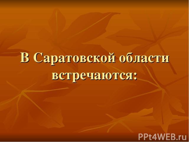 В Саратовской области встречаются: