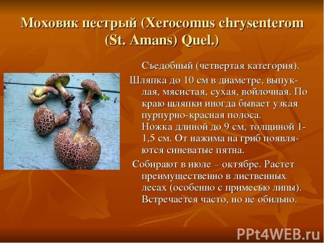 Моховик пестрый (Xerocomus chrysenterom (St. Amans) Quel.) Съедобный (четвертая категория). Шляпка до 10 см в диаметре, выпук-лая, мясистая, сухая, войлочная. По краю шляпки иногда бывает узкая пурпурно-красная полоса. Ножка длиной до 9 см, толщиной…