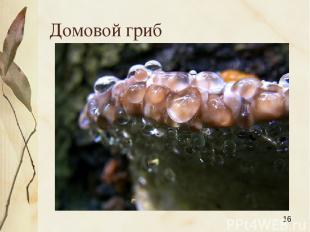 Домовой гриб Яковлева Л.А.