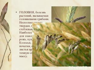 ГОЛОВНЯ, болезнь растений, вызываемая головневыми грибами. Несколько видов: твер