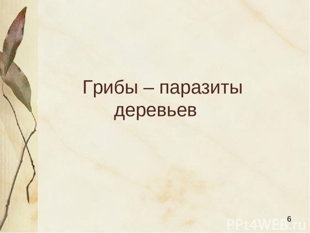 Грибы – паразиты деревьев Яковлева Л.А.