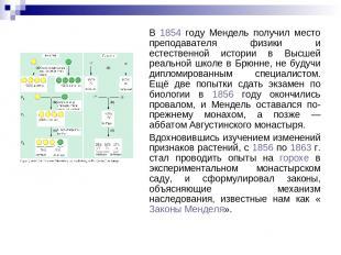В 1854 году Мендель получил место преподавателя физики и естественной истории в