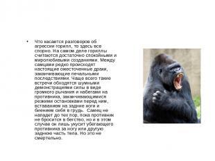 Что касается разговоров об агрессии горилл, то здесь все спорно. На самом деле г