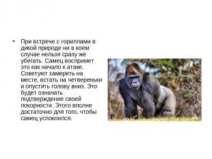 При встрече с гориллами в дикой природе ни в коем случае нельзя сразу же убегать