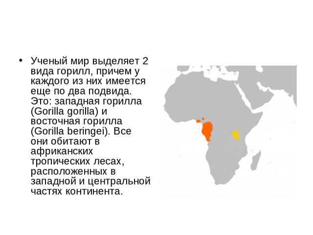 Ученый мир выделяет 2 вида горилл, причем у каждого из них имеется еще по два подвида. Это: западная горилла (Gorilla gorilla) и восточная горилла (Gorilla beringei). Все они обитают в африканских тропических лесах, расположенных в западной и центра…