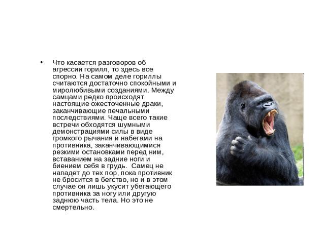Что касается разговоров об агрессии горилл, то здесь все спорно. На самом деле гориллы считаются достаточно спокойными и миролюбивыми созданиями. Между самцами редко происходят настоящие ожесточенные драки, заканчивающие печальными последствиями. Ча…
