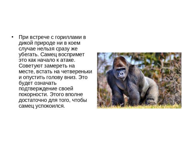 При встрече с гориллами в дикой природе ни в коем случае нельзя сразу же убегать. Самец воспримет это как начало к атаке. Советуют замереть на месте, встать на четвереньки и опустить голову вниз. Это будет означать подтверждение своей покорности. Эт…