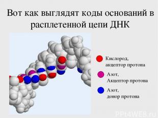 Вот как выглядят коды оснований в расплетенной цепи ДНК Кислород, акцептор прото