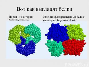 Вот как выглядят белки Порин из бактерии Klebsiella pneumoniae Зеленый флюоресце