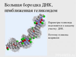 Большая бороздка ДНК, приближенная геликоидом Параметры геликоида подгоняются к