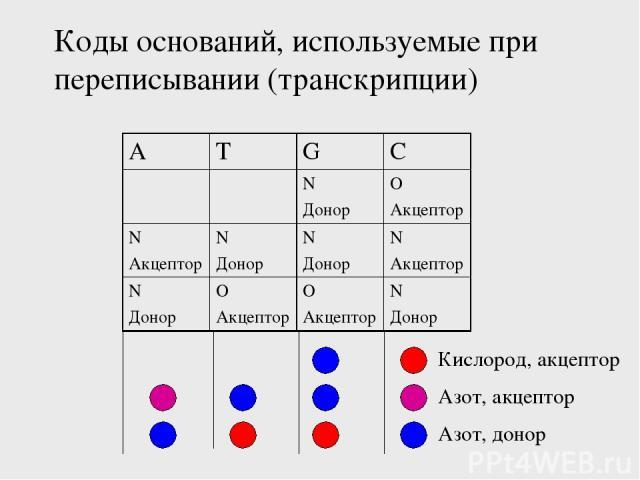 Коды оснований, используемые при переписывании (транскрипции) Кислород, акцептор Азот, донор Азот, акцептор A T G C N Донор O Акцептор N Акцептор N Донор N Донор N Акцептор N Донор O Акцептор O Акцептор N Донор