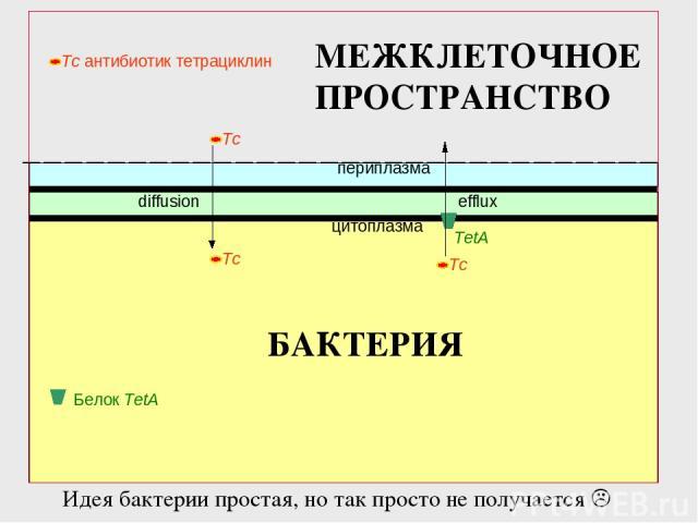 периплазма цитоплазма diffusion TetA efflux Белок TetA БАКТЕРИЯ МЕЖКЛЕТОЧНОЕ ПРОСТРАНСТВО Идея бактерии простая, но так просто не получается