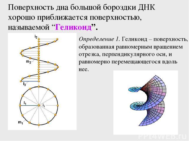 """Поверхность дна большой бороздки ДНК хорошо приближается поверхностью, называемой """"Геликоид"""". Определение 1. Геликоид – поверхность, образованная равномерным вращением отрезка, перпендикулярного оси, и равномерно перемещающегося вдоль нее."""