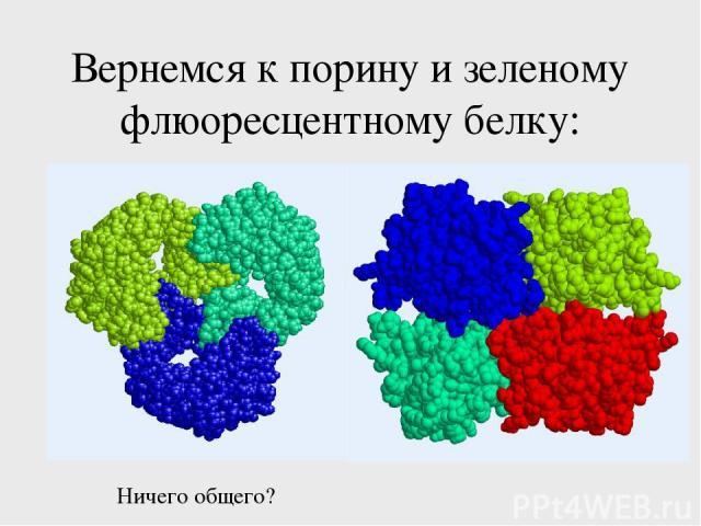 Вернемся к порину и зеленому флюоресцентному белку: Ничего общего?