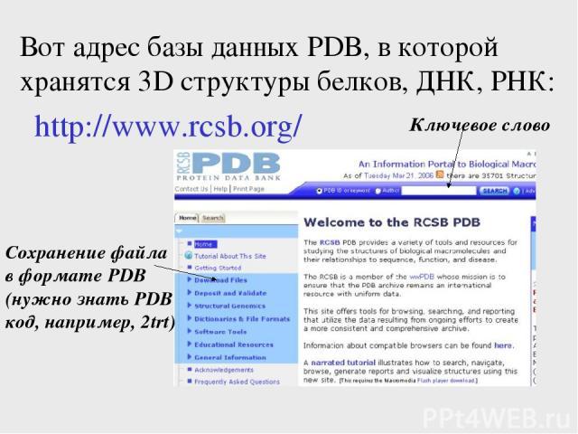 Вот адрес базы данных PDB, в которой хранятся 3D структуры белков, ДНК, РНК: http://www.rcsb.org/ Ключевое слово Сохранение файла в формате PDB (нужно знать PDB код, например, 2trt)