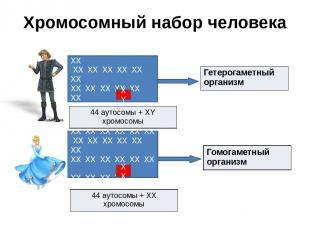 Хромосомный набор человека ХХ ХХ ХХ ХХ ХХ ХХ ХХ ХХ ХХ ХХ ХХ ХХ ХХ ХХ ХХ ХХ ХХ ХХ