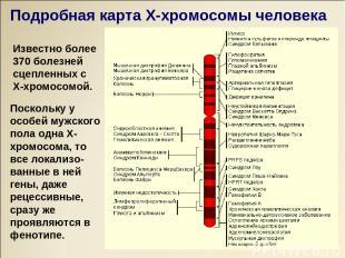 Известно более 370 болезней сцепленных с Х-хромосомой. Поскольку у особей мужско