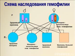 X Y X O X X X X o X X Y o X Y P Здоровый мужчина Женщина - носительница гена гем
