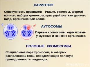 АУТОСОМЫ ПОЛОВЫЕ ХРОМОСОМЫ КАРИОТИП Совокупность признаков (число, размеры, форм