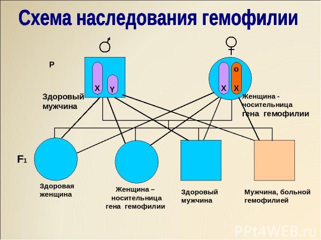 X Y X O X X X X o X X Y o X Y P Здоровый мужчина Женщина - носительница гена гемофилии F1 Здоровая женщина Женщина – носительница гена гемофилии Здоровый мужчина Мужчина, больной гемофилией