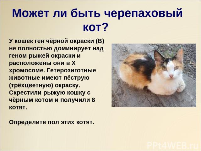 У кошек ген чёрной окраски (В) не полностью доминирует над геном рыжей окраски и расположены они в Х хромосоме. Гетерозиготные животные имеют пёструю (трёхцветную) окраску. Скрестили рыжую кошку с чёрным котом и получили 8 котят. Определите пол этих…