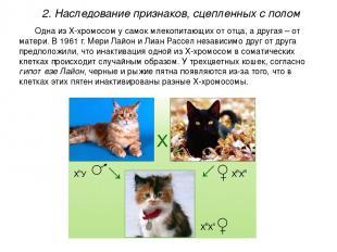 Одна из Х-хромосом у самок млекопитающих от отца, а другая – от матери. В 1961 г