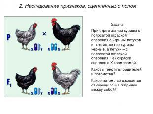 Задача: При скрещивании курицы с полосатой окраской оперения с черным петухом в
