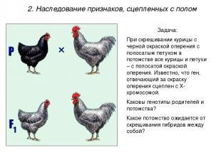 Задача: При скрещивании курицы с черной окраской оперения с полосатым петухом в