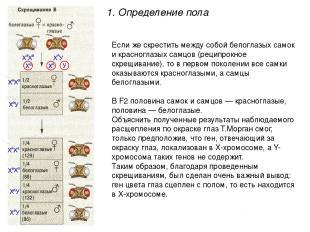 Если же скрестить между собой белоглазых самок и красноглазых самцов (реципрокно