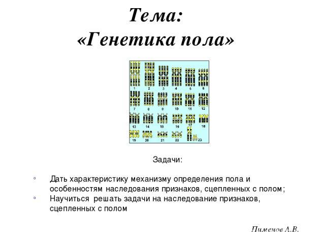 Тема: «Генетика пола» Пименов А.В. Задачи: Дать характеристику механизму определения пола и особенностям наследования признаков, сцепленных с полом; Научиться решать задачи на наследование признаков, сцепленных с полом