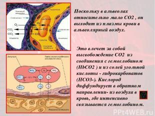 Это влечет за собой высвобождение CO2 из соединения с гемоглобином (HbСO2 ) и из