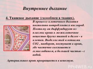Внутреннее дыхание 4. Тканевое дыхание (газообмен в тканях). В процессе клеточно