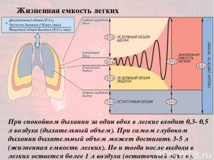 При спокойном дыхании за один вдох в легкие входит 0,3- 0,5 л воздуха (дыхательн